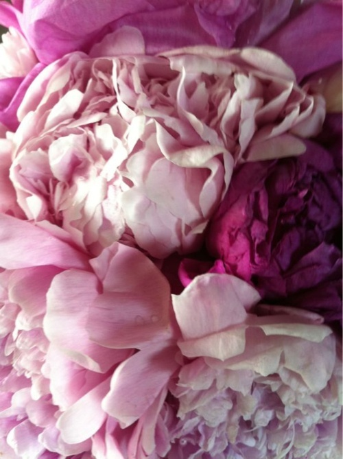 Peonies Season peony season | revel in it mag